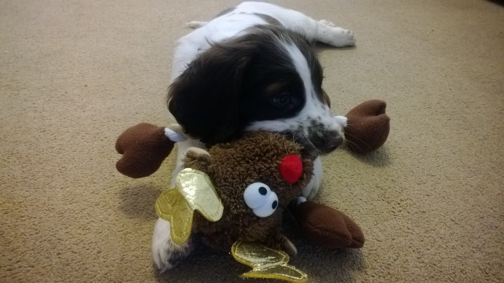 With his fav toy.